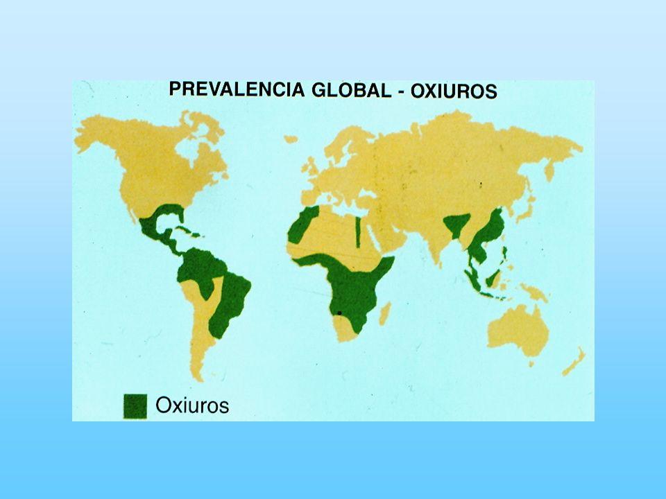 Epidemiología Factores ambientales No requiere de condiciones ambientales propicias.