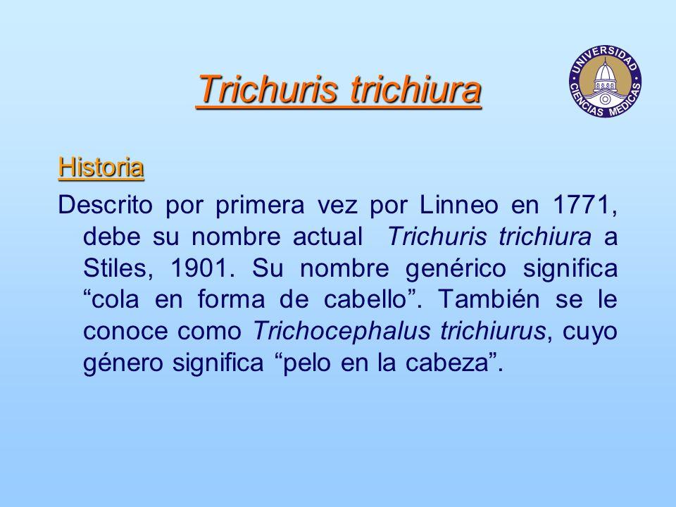 Trichuris trichiura Historia Descrito por primera vez por Linneo en 1771, debe su nombre actual Trichuris trichiura a Stiles, 1901. Su nombre genérico