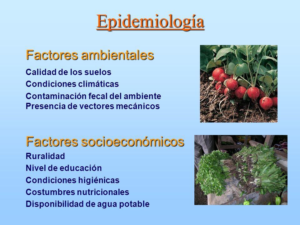 Epidemiología Factores ambientales Calidad de los suelos Condiciones climáticas Contaminación fecal del ambiente Presencia de vectores mecánicos Facto