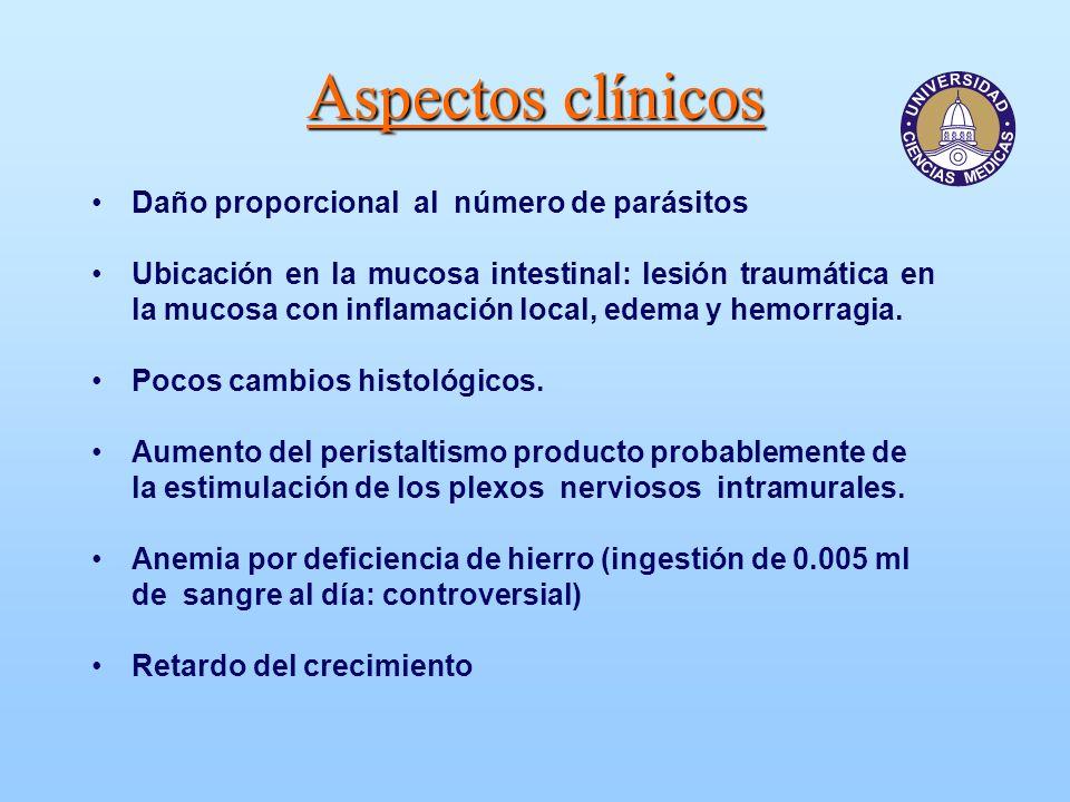 Aspectos clínicos Daño proporcional al número de parásitos Ubicación en la mucosa intestinal: lesión traumática en la mucosa con inflamación local, ed
