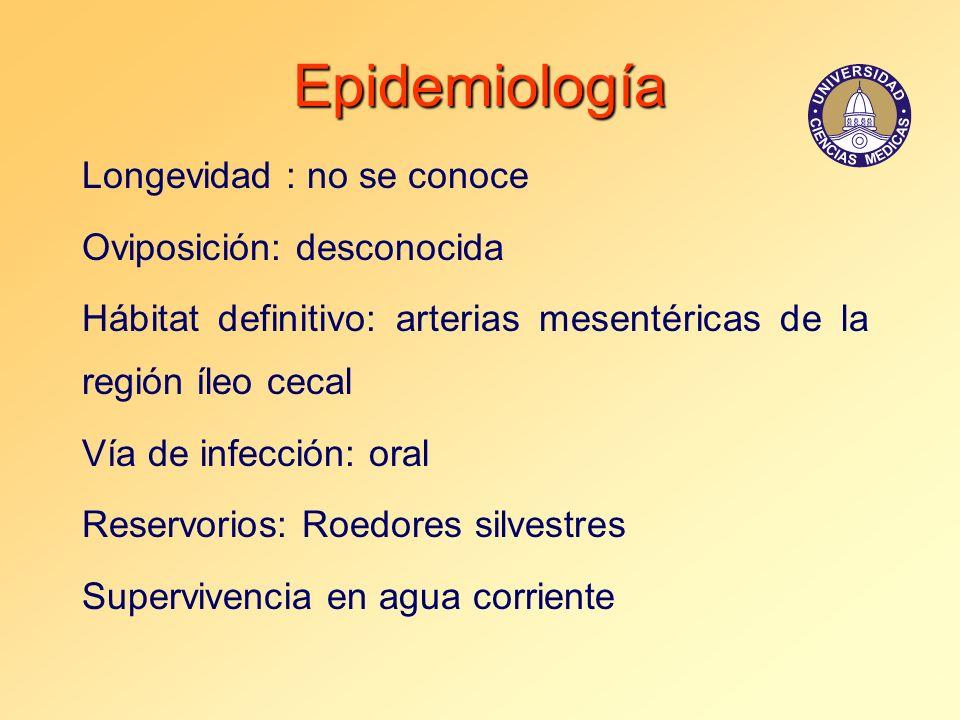 Epidemiología Longevidad : no se conoce Oviposición: desconocida Hábitat definitivo: arterias mesentéricas de la región íleo cecal Vía de infección: o