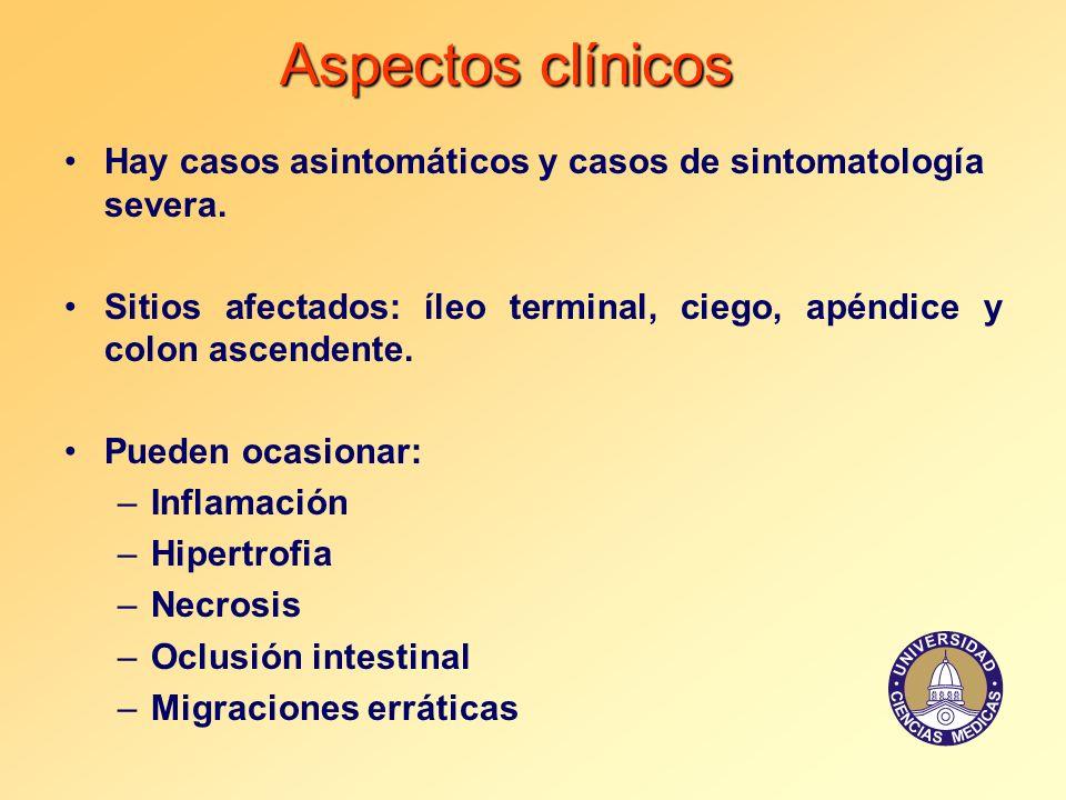 Aspectos clínicos Hay casos asintomáticos y casos de sintomatología severa. Sitios afectados: íleo terminal, ciego, apéndice y colon ascendente. Puede