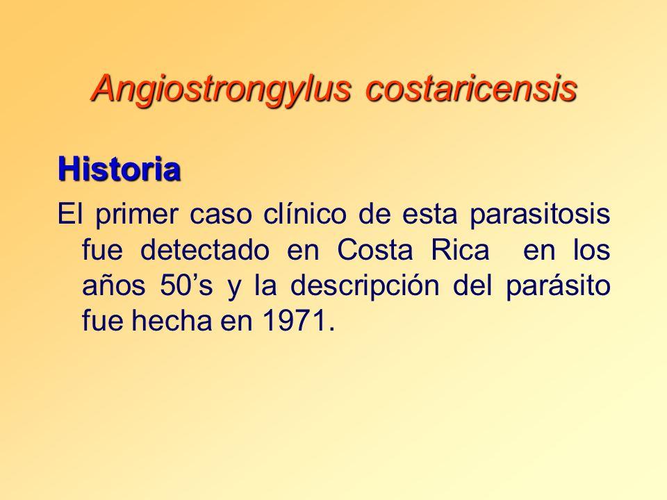 Angiostrongylus costaricensis Historia El primer caso clínico de esta parasitosis fue detectado en Costa Rica en los años 50s y la descripción del par
