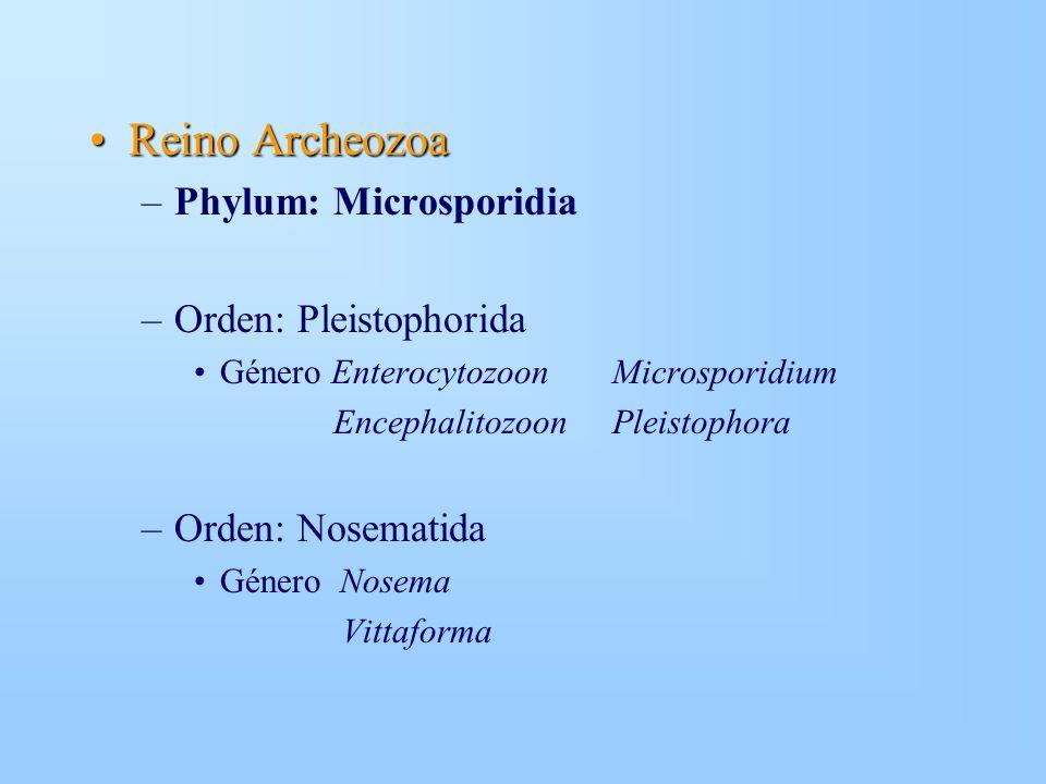 Reino ArcheozoaReino Archeozoa –Phylum: Microsporidia –Orden: Pleistophorida Género EnterocytozoonMicrosporidium EncephalitozoonPleistophora –Orden: N