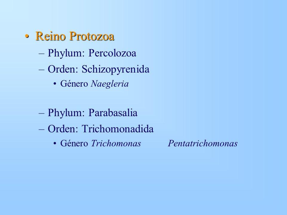 Reino ProtozoaReino Protozoa –Phylum: Percolozoa –Orden: Schizopyrenida Género Naegleria –Phylum: Parabasalia –Orden: Trichomonadida Género Trichomona