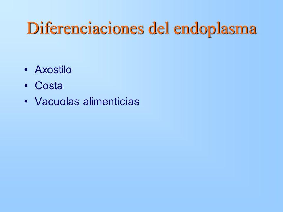Axostilo Costa Vacuolas alimenticias Diferenciaciones del endoplasma