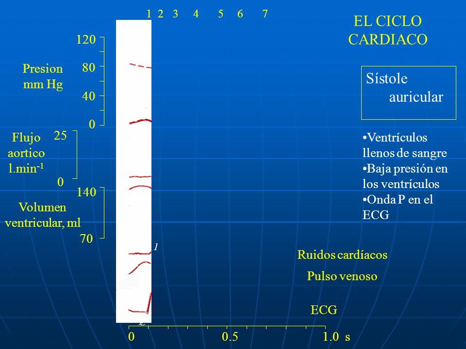 Pulso venoso 120 80 40 0 140 70 25 0 Ruidos cardíacos Presion mm Hg Flujo aortico l.min -1 Volumen ventricular, ml ECG a R Q P 1 4 0 0.5 1.0 s 1234567