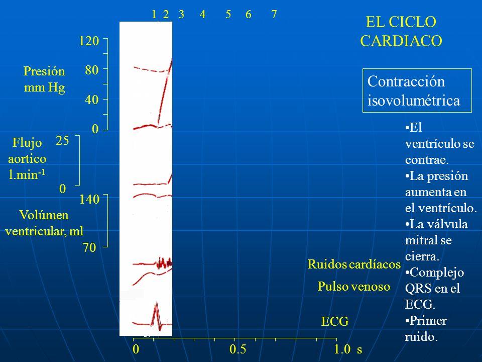 120 80 40 0 140 70 25 0 ECG a R Q S P 1 4 La válvula mitral se cierra 0 0.5 1.0 s 1234567 Contracción isovolumétrica El ventrículo se contrae. La pres