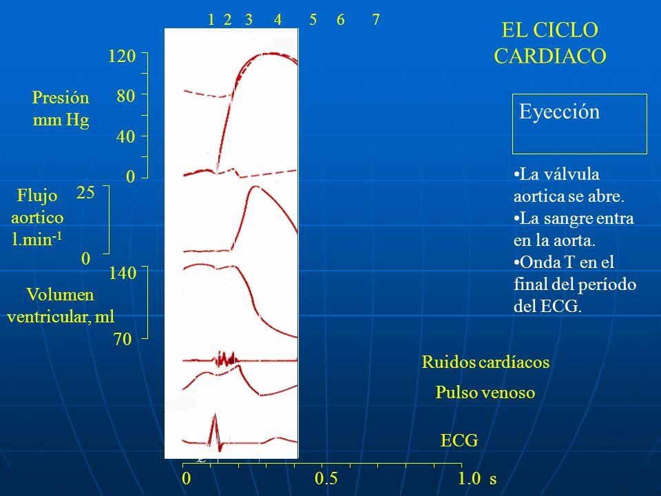 120 80 40 0 140 70 25 0 ac v R Q S PT 1 24 Valvula mitral cierra valvula aortica abre La valvula aortica se cierra 0 0.5 1.0 s 1234567 Relajación isovolumétrica El ventrículo se relaja.