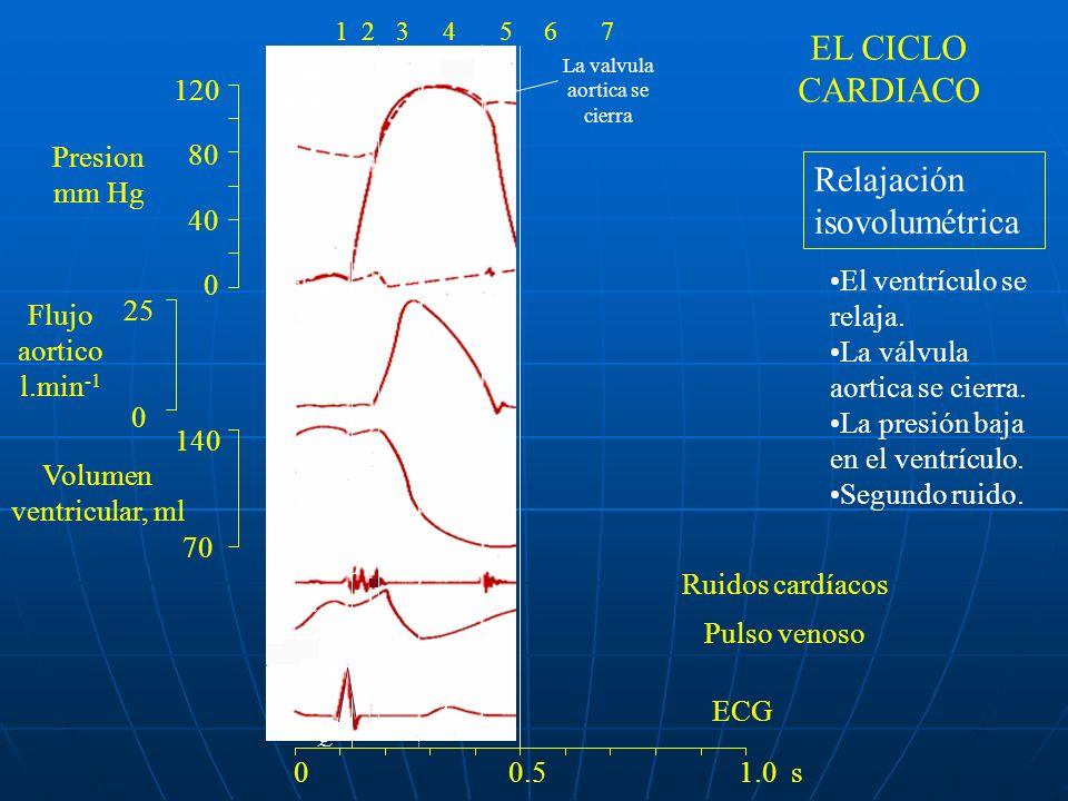 120 80 40 0 140 70 25 0 ac v R Q S PTP 1 234 La valvula mitral se abre 0 0.5 1.0 s 1234567 Llenado El ventrículo esta relajado.