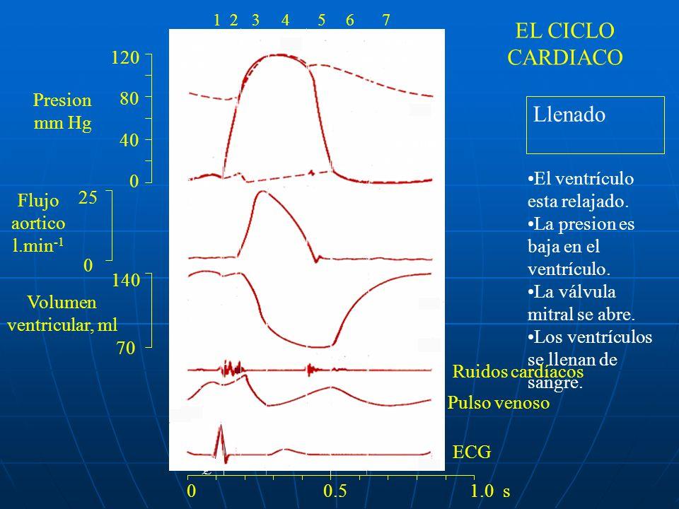 Ruidos Cardíacos Ruidos Cardíacos Desdoblamiento fijo del segundo ruido: Desdoblamiento fijo del segundo ruido: Es el signo clínico más importante del defecto del tabique auricular.Es el signo clínico más importante del defecto del tabique auricular.