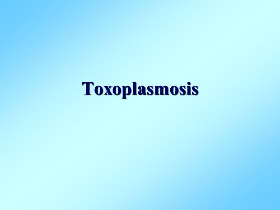 Toxoplasmosis Infección por Toxoplasma gondii que se caracteriza por producir trastornos en varios órganos del cuerpo y cuyas manifestaciones más severas se presentan en pacientes inmunosupresos.