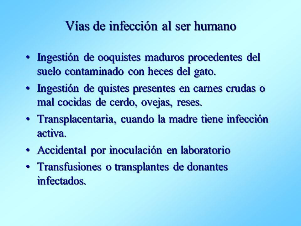 Vías de infección al ser humano Ingestión de ooquistes maduros procedentes del suelo contaminado con heces del gato.Ingestión de ooquistes maduros pro