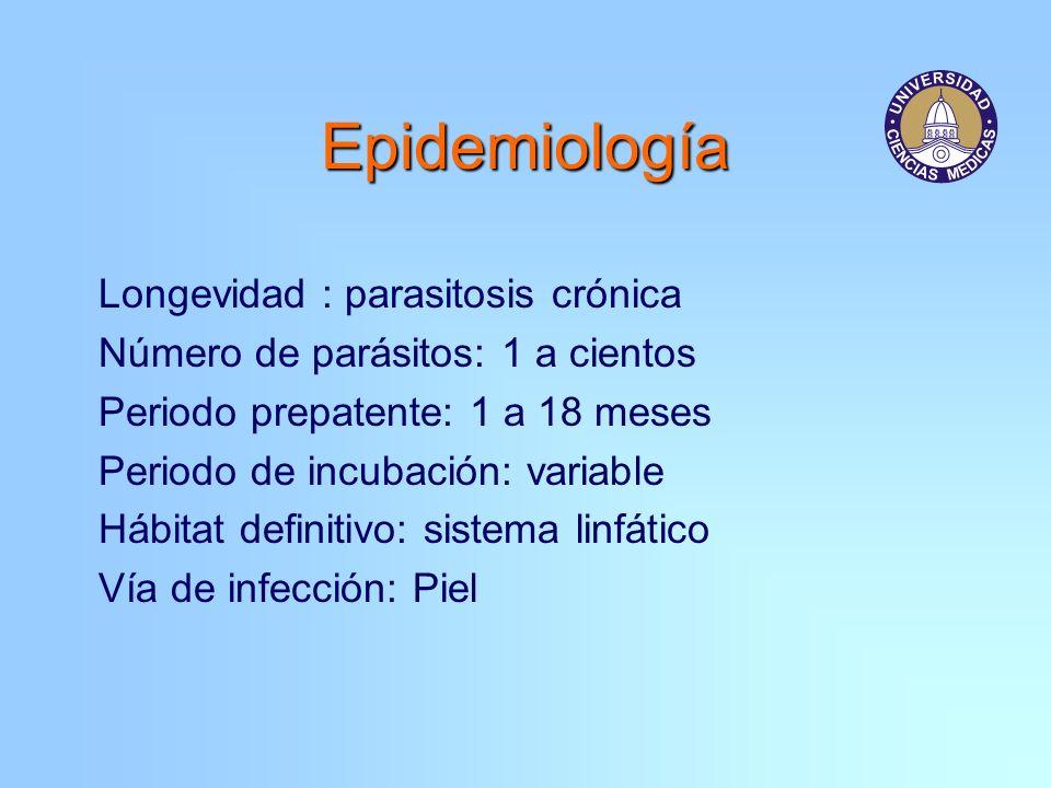 Epidemiología Longevidad : parasitosis crónica Número de parásitos: 1 a cientos Periodo prepatente: 1 a 18 meses Periodo de incubación: variable Hábit