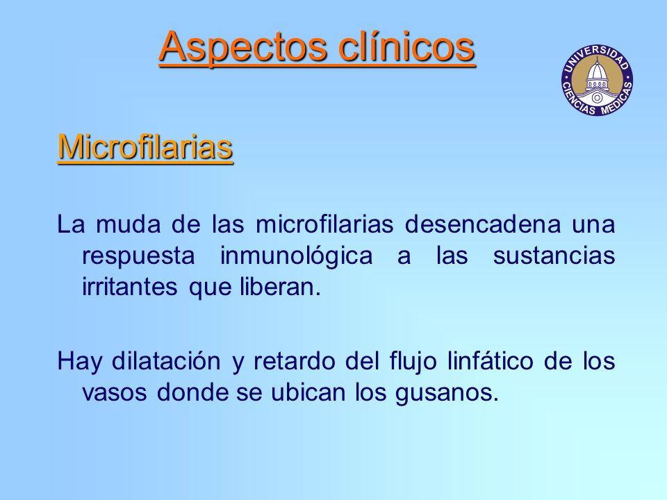 Aspectos clínicos Microfilarias La muda de las microfilarias desencadena una respuesta inmunológica a las sustancias irritantes que liberan. Hay dilat