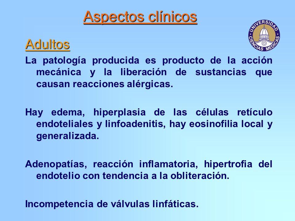 Adultos La patología producida es producto de la acción mecánica y la liberación de sustancias que causan reacciones alérgicas. Hay edema, hiperplasia