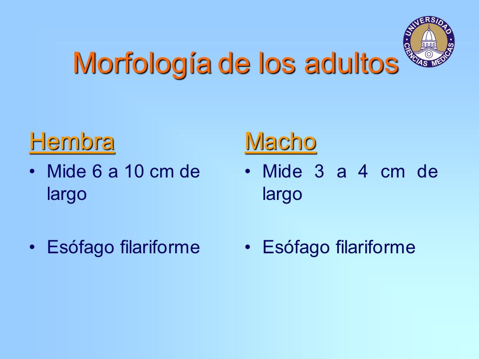 Morfología de los adultos Hembra Mide 6 a 10 cm de largo Esófago filariformeMacho Mide 3 a 4 cm de largo Esófago filariforme