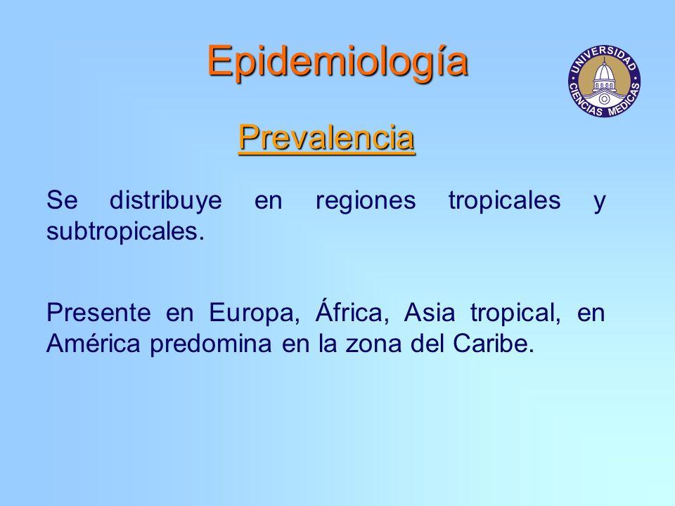 Epidemiología Prevalencia Se distribuye en regiones tropicales y subtropicales. Presente en Europa, África, Asia tropical, en América predomina en la