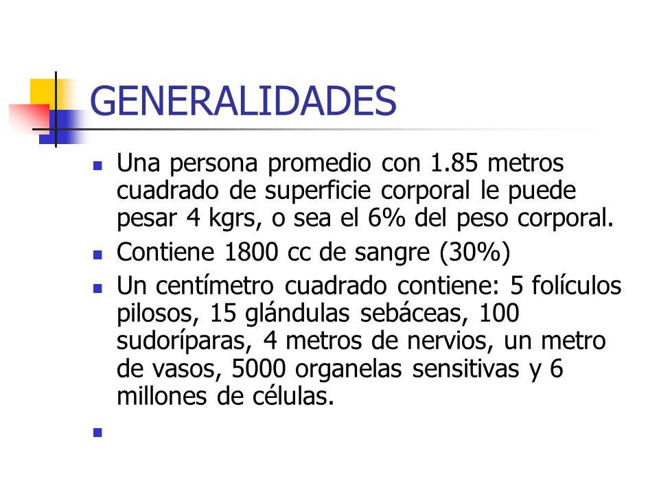 GENERALIDADES Una persona promedio con 1.85 metros cuadrado de superficie corporal le puede pesar 4 kgrs, o sea el 6% del peso corporal. Contiene 1800