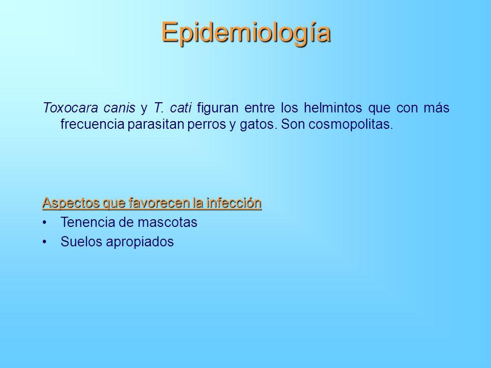 Epidemiología Toxocara canis y T. cati figuran entre los helmintos que con más frecuencia parasitan perros y gatos. Son cosmopolitas. Aspectos que fav
