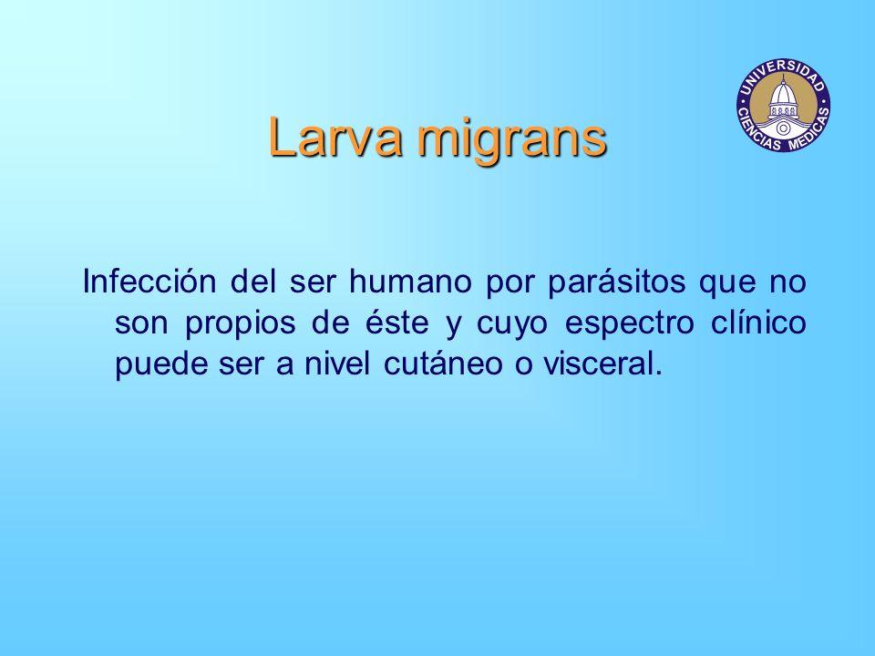 Infección del ser humano por parásitos que no son propios de éste y cuyo espectro clínico puede ser a nivel cutáneo o visceral.