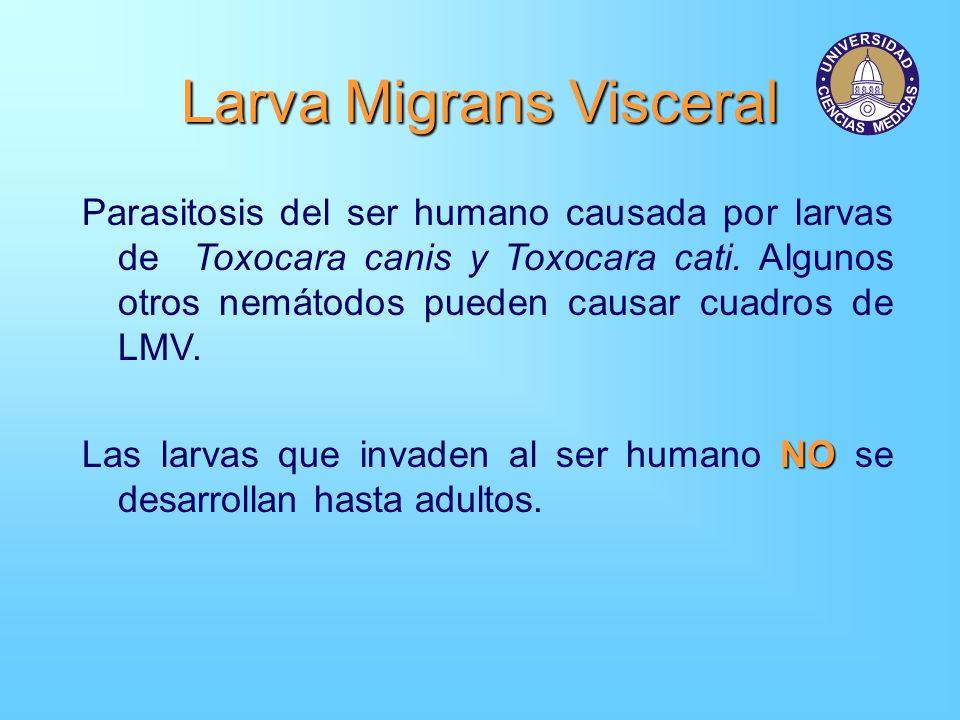 Larva Migrans Visceral Parasitosis del ser humano causada por larvas de Toxocara canis y Toxocara cati. Algunos otros nemátodos pueden causar cuadros