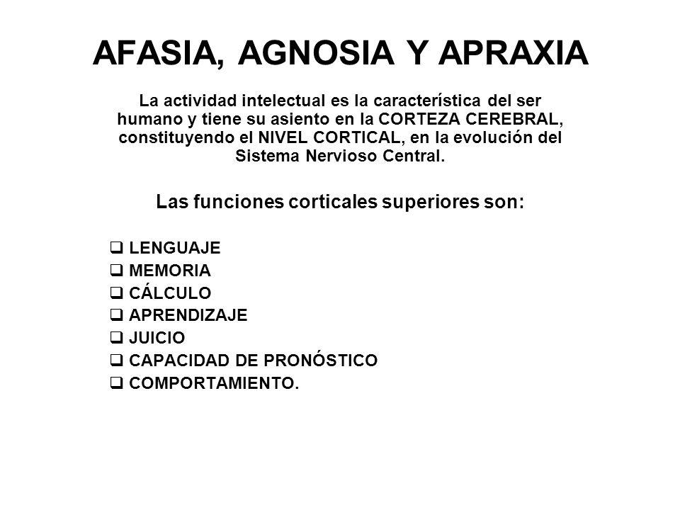 AFASIA, AGNOSIA Y APRAXIA La actividad intelectual es la característica del ser humano y tiene su asiento en la CORTEZA CEREBRAL, constituyendo el NIV