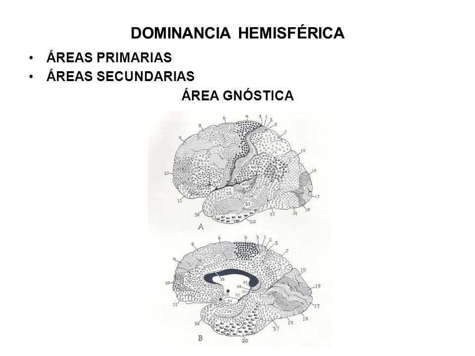 DOMINANCIA HEMISFÉRICA ÁREAS PRIMARIAS ÁREAS SECUNDARIAS ÁREA GNÓSTICA