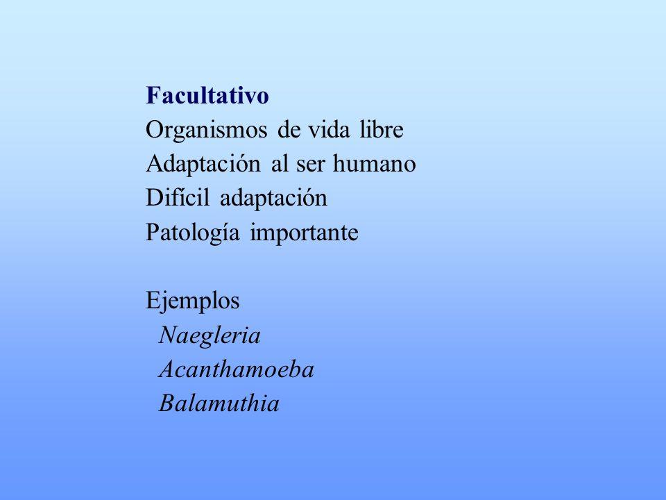 Facultativo Organismos de vida libre Adaptación al ser humano Difícil adaptación Patología importante Ejemplos Naegleria Acanthamoeba Balamuthia