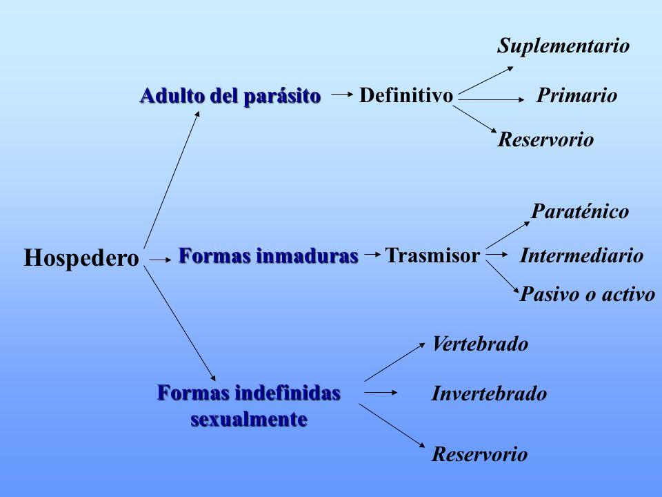 Hospedero Adulto del parásito Adulto del parásito DefinitivoPrimario Suplementario Reservorio Formas inmaduras Formas inmaduras Trasmisor Paraténico I
