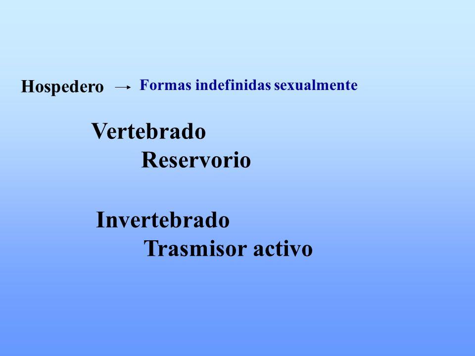 Hospedero Formas indefinidas sexualmente Vertebrado Reservorio Invertebrado Trasmisor activo