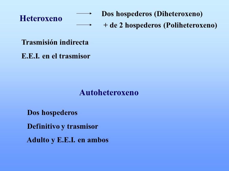 Heteroxeno Dos hospederos (Diheteroxeno) + de 2 hospederos (Poliheteroxeno) Trasmisión indirecta E.E.I. en el trasmisor Autoheteroxeno Dos hospederos