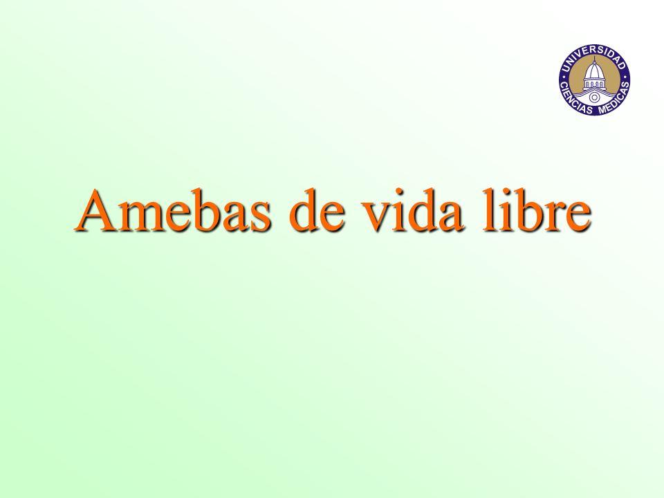 Aspectos clínicos Acanthamoeba corneum, A.polyphaga, A.