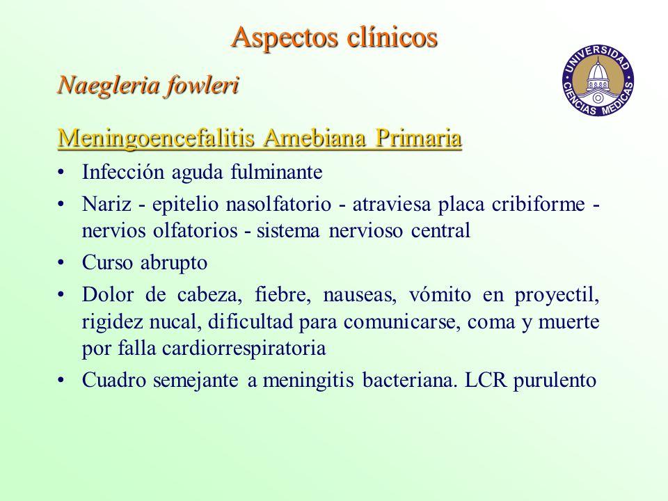 Aspectos clínicos Naegleria fowleri Meningoencefalitis Amebiana Primaria Infección aguda fulminante Nariz - epitelio nasolfatorio - atraviesa placa cr