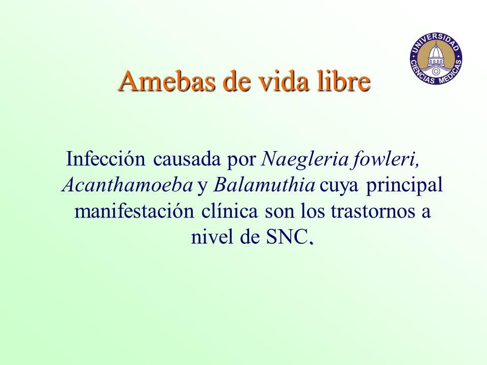 . Infección causada por Naegleria fowleri, Acanthamoeba y Balamuthia cuya principal manifestación clínica son los trastornos a nivel de SNC.