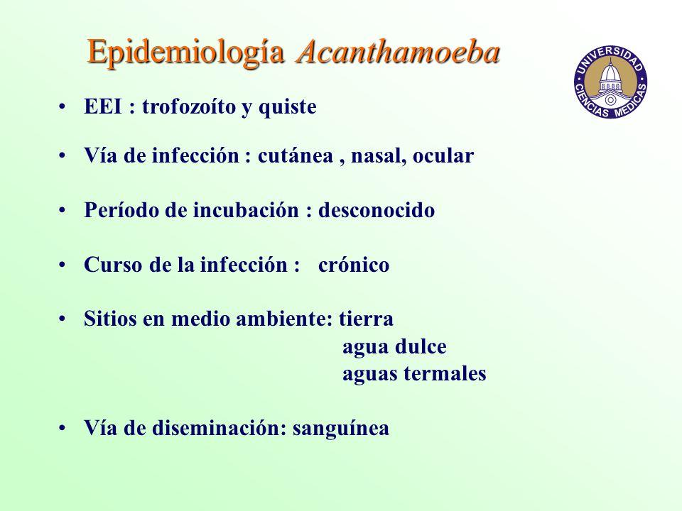 Epidemiología Acanthamoeba EEI : trofozoíto y quiste Vía de infección : cutánea, nasal, ocular Período de incubación : desconocido Curso de la infecci