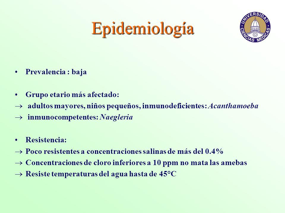 Epidemiología Prevalencia : baja Grupo etario más afectado: adultos mayores, niños pequeños, inmunodeficientes: Acanthamoeba inmunocompetentes: Naegle