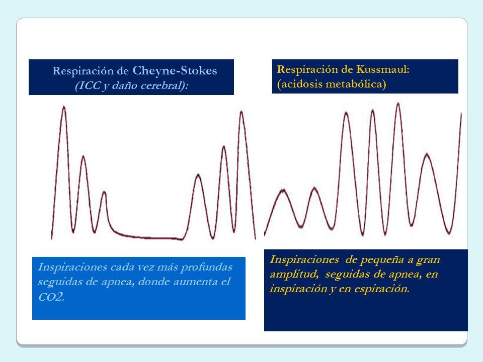 Respiración de Cheyne-Stokes (ICC y daño cerebral): Inspiraciones cada vez más profundas seguidas de apnea, donde aumenta el CO 2. Inspiraciones de pe