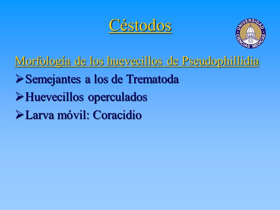 Céstodos Morfología de los huevecillos de Pseudophillidia Semejantes a los de Trematoda Semejantes a los de Trematoda Huevecillos operculados Huevecil