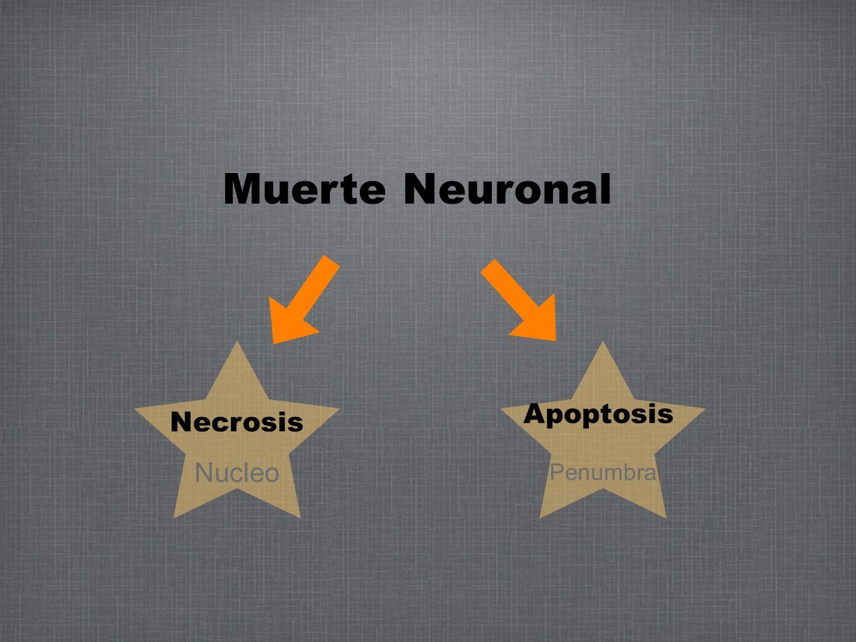 Muerte Neuronal Apoptosis Necrosis Nucleo Penumbra