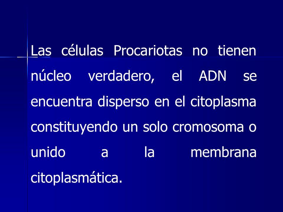 Las células Procariotas no tienen núcleo verdadero, el ADN se encuentra disperso en el citoplasma constituyendo un solo cromosoma o unido a la membran