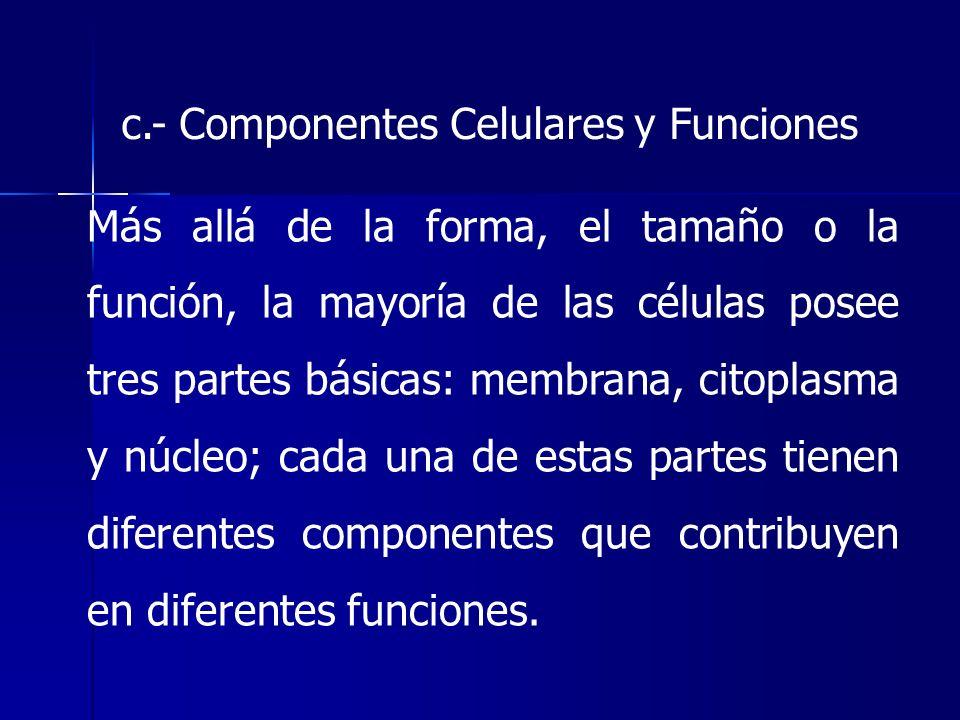 c.- Componentes Celulares y Funciones Más allá de la forma, el tamaño o la función, la mayoría de las células posee tres partes básicas: membrana, cit