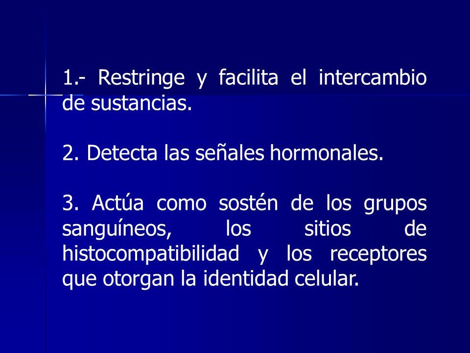 1.- Restringe y facilita el intercambio de sustancias. 2. Detecta las señales hormonales. 3. Actúa como sostén de los grupos sanguíneos, los sitios de