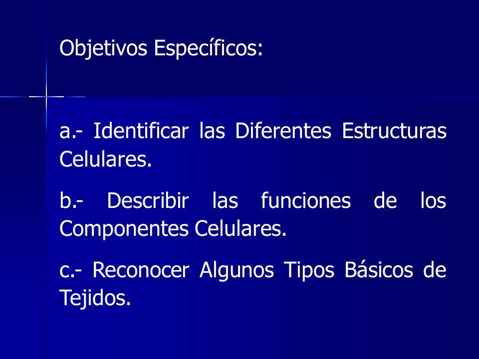Objetivos Específicos: a.- Identificar las Diferentes Estructuras Celulares. b.- Describir las funciones de los Componentes Celulares. c.- Reconocer A