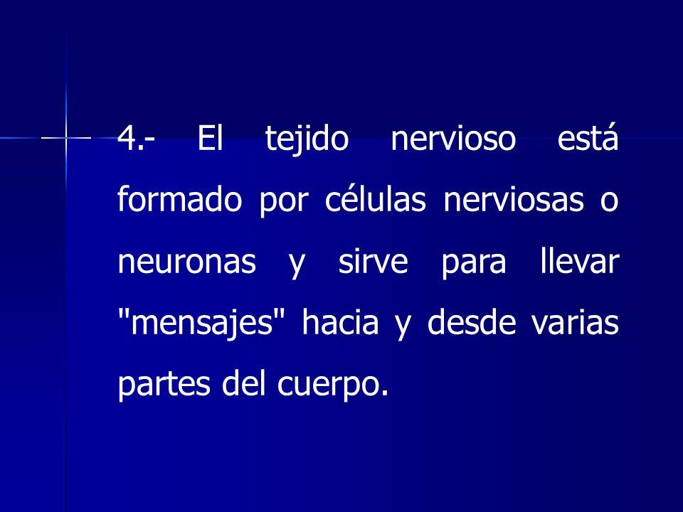 4.- El tejido nervioso está formado por células nerviosas o neuronas y sirve para llevar