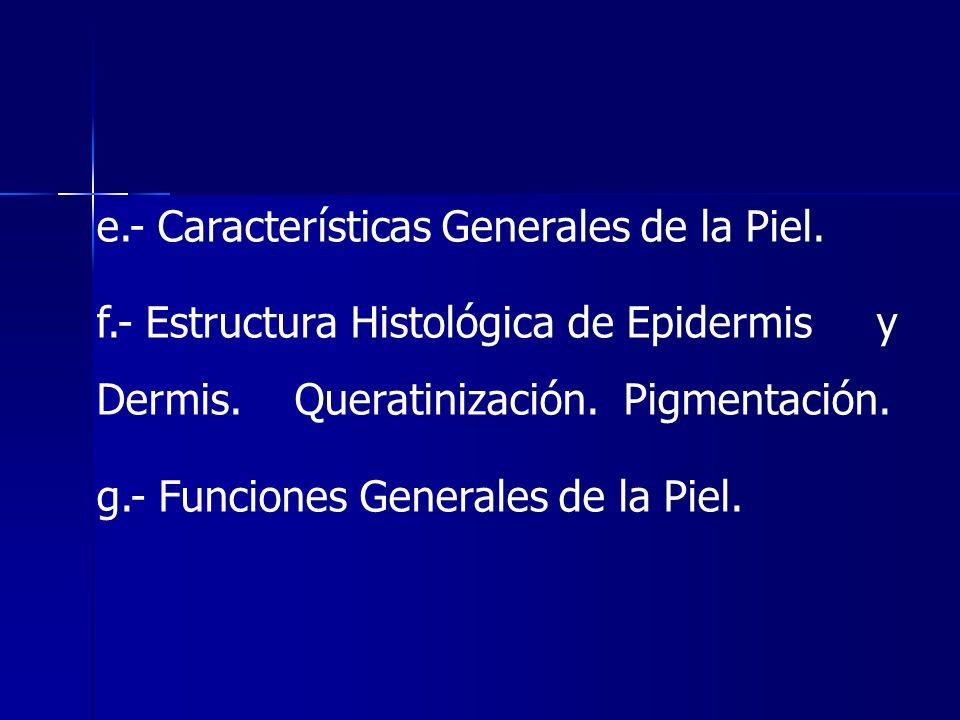 e.- Características Generales de la Piel. f.- Estructura Histológica de Epidermis y Dermis. Queratinización. Pigmentación. g.- Funciones Generales de