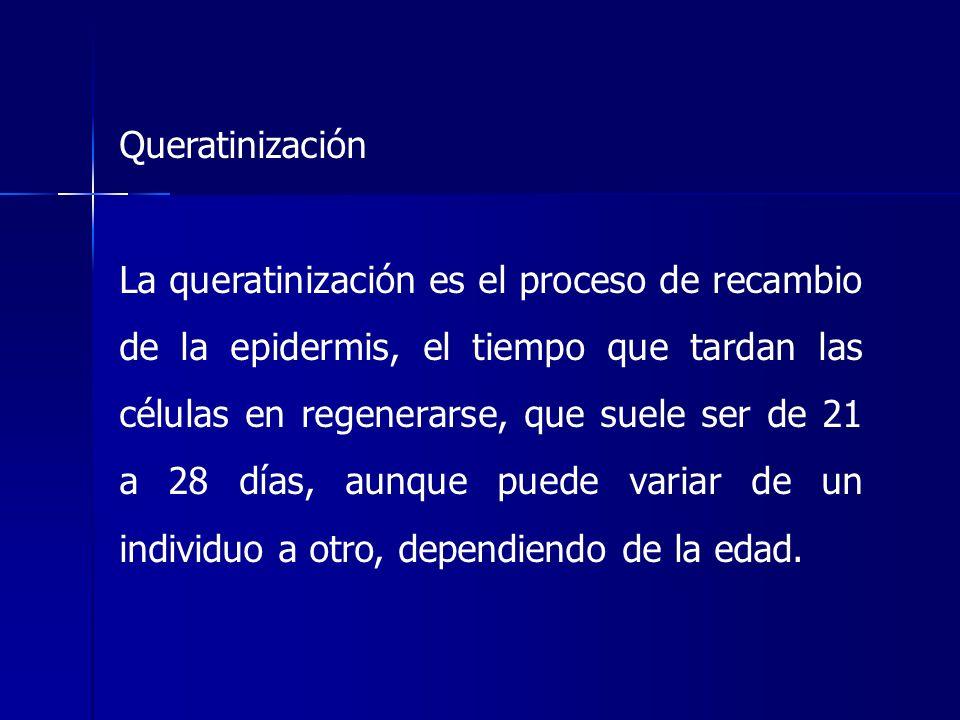 Queratinización La queratinización es el proceso de recambio de la epidermis, el tiempo que tardan las células en regenerarse, que suele ser de 21 a 2