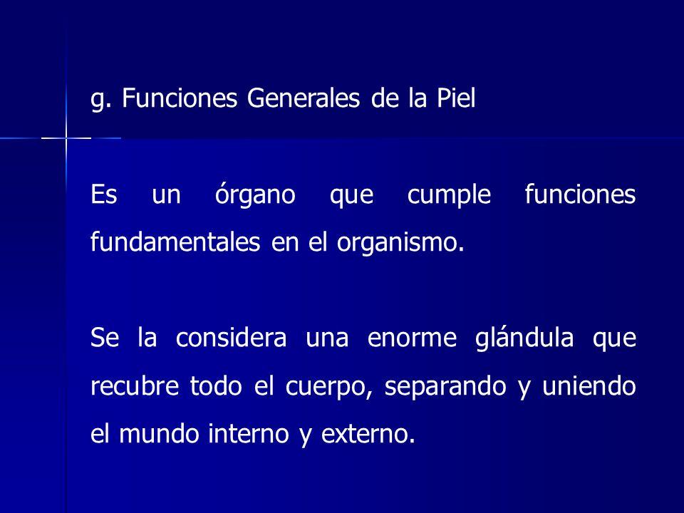 g. Funciones Generales de la Piel Es un órgano que cumple funciones fundamentales en el organismo. Se la considera una enorme glándula que recubre tod
