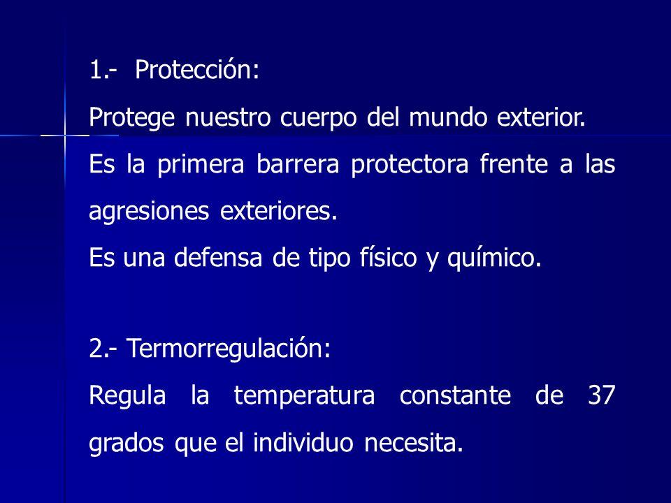 1.- Protección: Protege nuestro cuerpo del mundo exterior. Es la primera barrera protectora frente a las agresiones exteriores. Es una defensa de tipo
