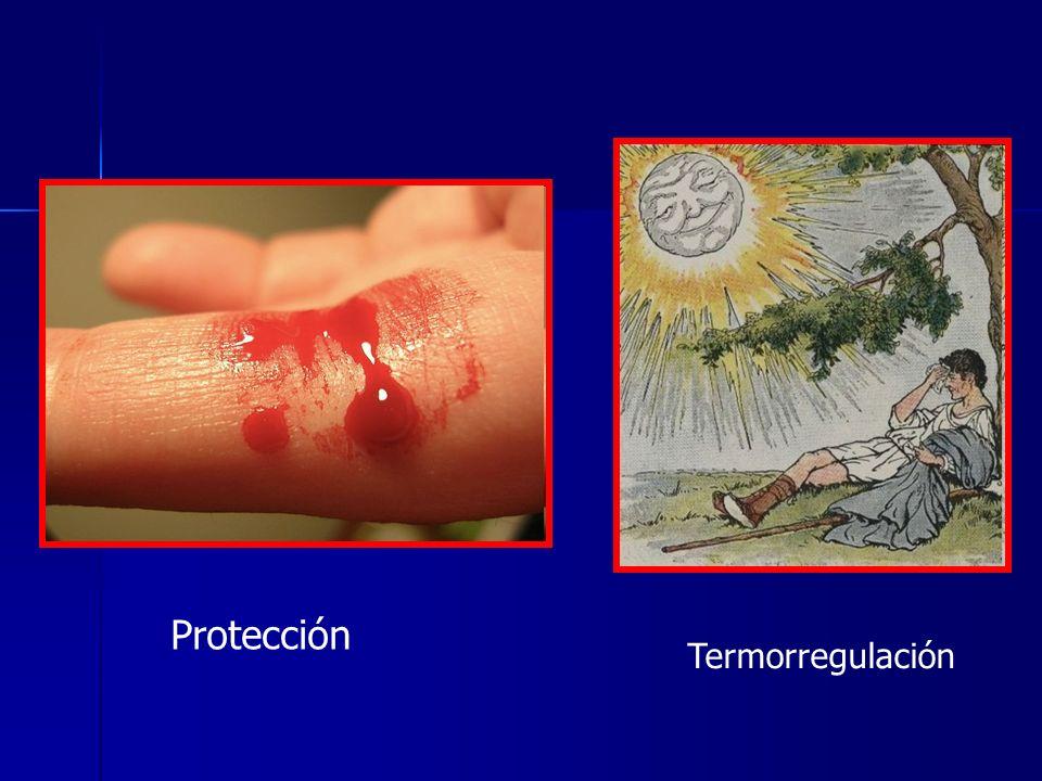 Protección Termorregulación